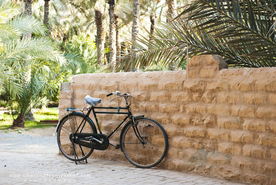 Ride in the Oasis