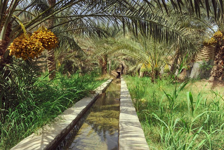 Hili Oasis